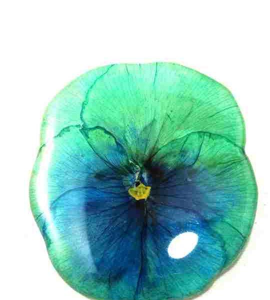 veritable-pensee-vert-turquoise-en-broche-m